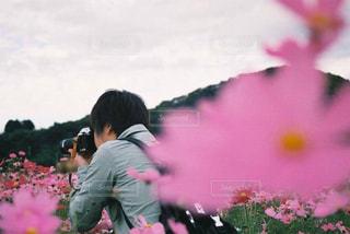 秋,コスモス,film,秋桜,フィルムカメラ