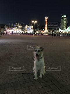 夜景とワンコの写真・画像素材[1454213]