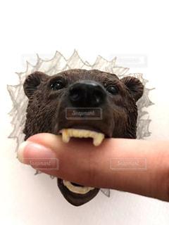 熊に噛まれるの写真・画像素材[1464924]
