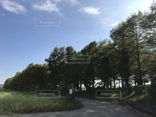 散歩日和の写真・画像素材[1467474]