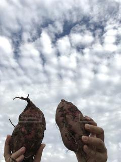 さつまいもと空の写真・画像素材[1481204]