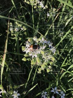 蜂と花の写真・画像素材[1497093]