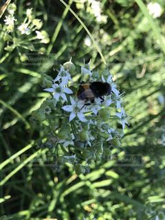 花,秋,晴れ,散歩,外,蜂,昆虫,日中