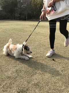 犬,公園,芝生,屋外,ペット,外,緑色,ワンコ,諦めない