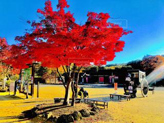 秋,紅葉,屋外,赤,青,もみじ,樹木,青い,赤い,草木,岩手県,えさし藤原の郷