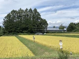 自然,空,雲,山,稲,米,畑,案山子