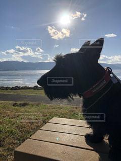 犬,自然,空,動物,屋外,湖,太陽,雲,秋空