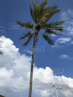 青空,タイ,パーム