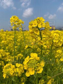花,春,黄色,景色
