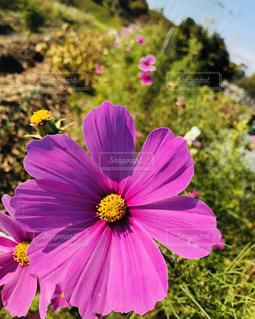 近くの花のアップの写真・画像素材[1454426]