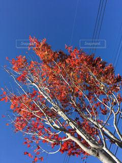 秋空の写真・画像素材[1487233]