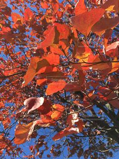 秋,紅葉,屋外,散歩,秋空,草木,レジャー・趣味