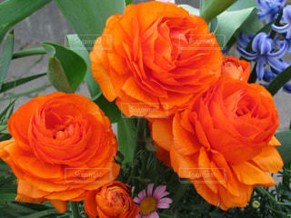 テーブルの上の花の写真・画像素材[1537811]