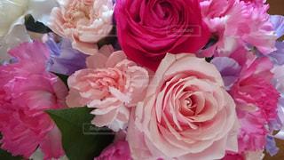花,ピンク,綺麗,バラ
