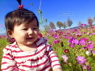 花,秋,花畑,コスモス,青空,女の子,赤ちゃん,ベビー