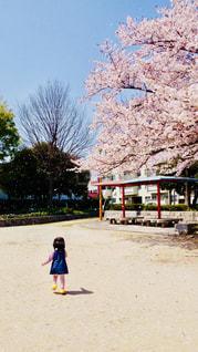 春,桜,ピンク,花びら,女の子,お花見,背中,花吹雪
