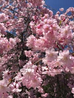 花,ピンク,カラフル,鮮やか,色・表現