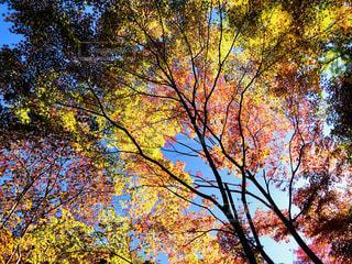 秋の風景の写真・画像素材[1598859]