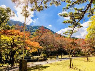大寧寺の秋の風景の写真・画像素材[1615292]