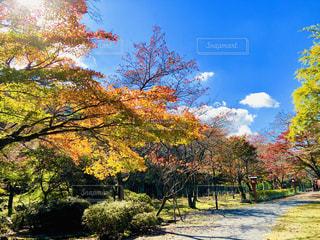 大寧寺の秋の風景の写真・画像素材[1615334]