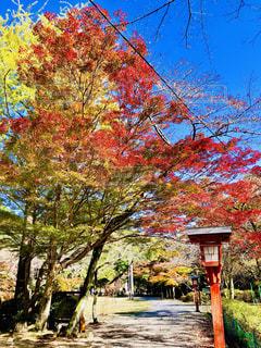大寧寺の秋の風景の写真・画像素材[1615358]