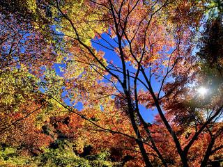 秋色の樹木の写真・画像素材[1615415]
