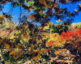 鮮やかな秋の色の写真・画像素材[1624229]