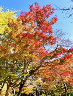 鮮やかな木々の写真・画像素材[1624254]
