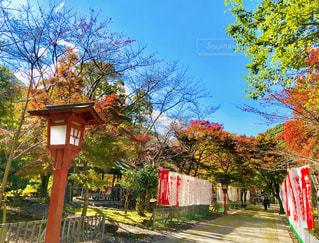 鮮やかに色づく木々の写真・画像素材[1624322]