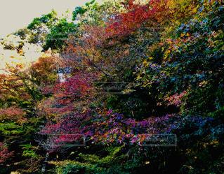 秋の樹木の写真・画像素材[1637810]