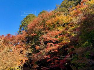 秋の樹木の写真・画像素材[1637818]