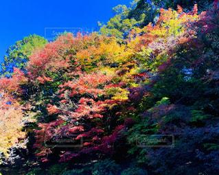 鮮やかな秋の色の写真・画像素材[1637822]