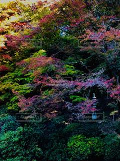 カラフルな秋の写真・画像素材[1638222]
