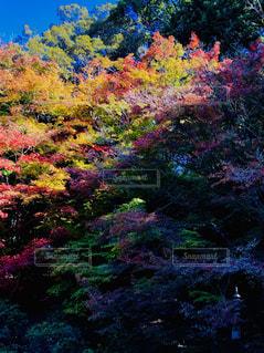 カラフルな秋の写真・画像素材[1638223]
