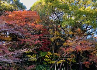 カラフルな秋の木々の写真・画像素材[1638226]