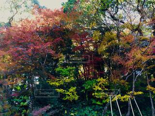 カラフルな秋の木々の写真・画像素材[1638227]