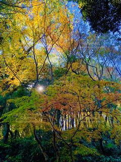 鮮やかな秋の木々の写真・画像素材[1638314]