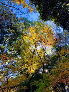 秋の木々の写真・画像素材[1638321]