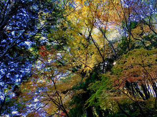 秋の樹木の写真・画像素材[1638334]