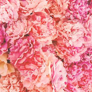 花,ピンク,写真,flower,pink,壁紙,フォトジェニック