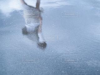 自然の写真・画像素材[206125]