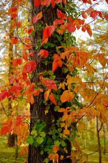 秋の写真・画像素材[244663]