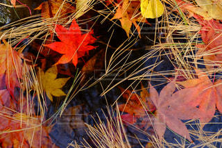 秋の写真・画像素材[246787]