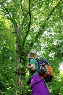 木の隣に立っている人 - No.789569