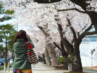 女性,カメラ,桜,桜並木,未来,夢,ポジティブ,目標,可能性