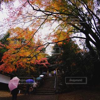 木の隣に立っている人のグループの写真・画像素材[1618509]