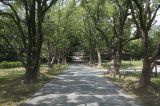 森の中の木の写真・画像素材[3343417]