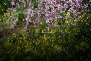 花のクローズアップの写真・画像素材[3343418]