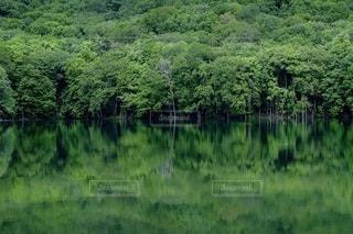 緑豊かな森の近くの写真・画像素材[3346963]