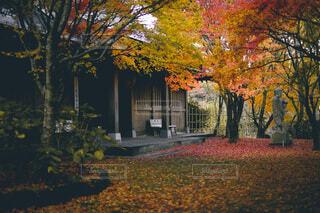 寺の紅葉の写真・画像素材[3876591]